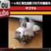 YouTubeだけでどれくらい稼げるか?調査しました。